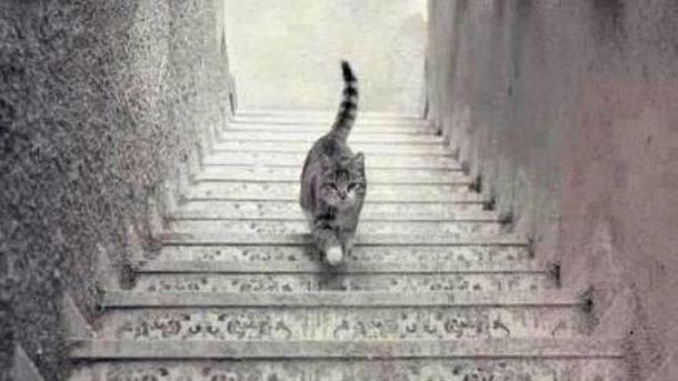 Foto: Este gato, ¿sube o baja las escaleras?