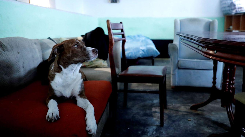 Foto: Botellones, drogas y hasta un cadáver: esto se encuentran los bancos en los pisos okupados. (Chema Moya / EFE)