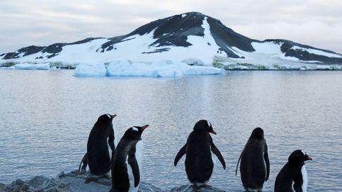 Pingüinos 'celebran' su día gravemente amenazados