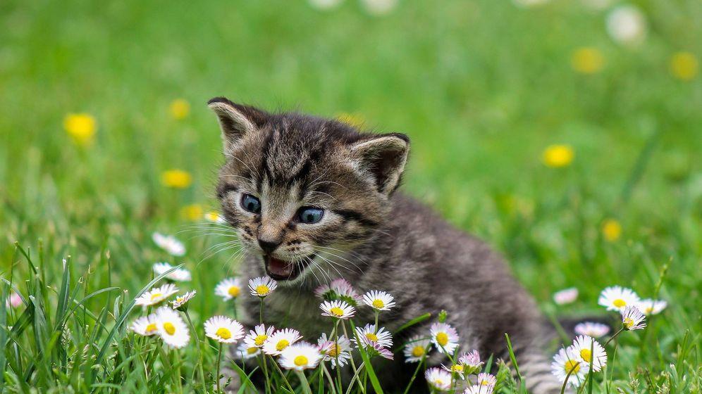 Foto: Un gato juega en el parque | Pixabay