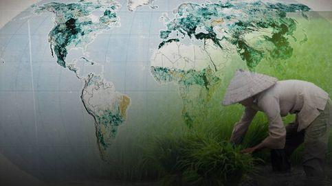 El planeta es cada vez más verde, pero no es tan buena noticia