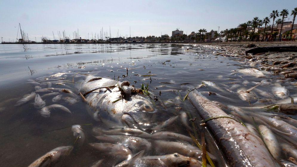 Foto: Peces muertos en el Mar Menor. (EFE)