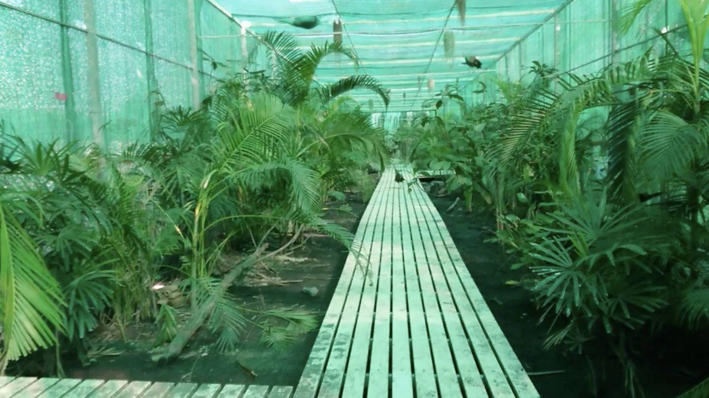Imagen de la Jungle Walk del centro de Frank Cuesta en Tailandia.