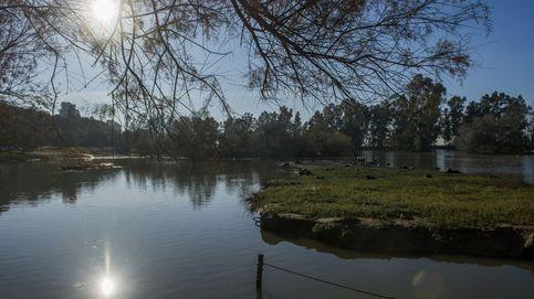 Las 'plagas' que azotan Doñana: el problema es el agua, no el fuego