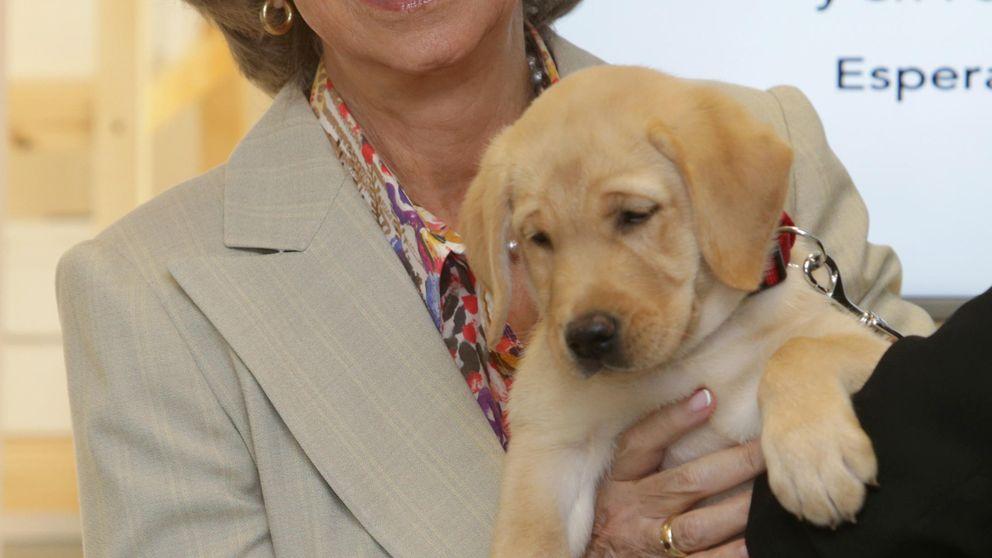 La Reina Sofía muestra su lado más cariñoso con un cachorro