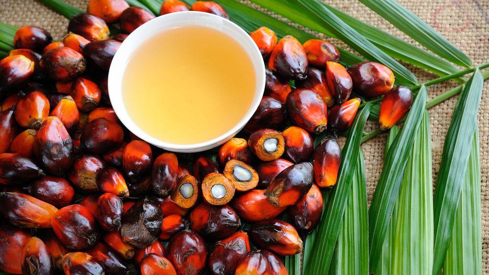 Foto: Los frutos de los que surge el odiado aceite de palma. (iStock)