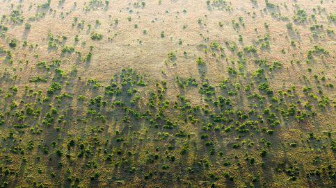 La Gran Muralla Verde africana: árboles contra el desierto y el terrorismo islámico.