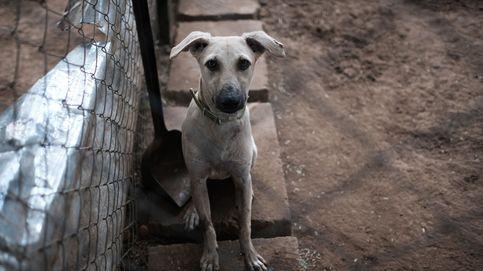 México quiere mandar a la cárcel a las personas que abandonen a sus mascotas