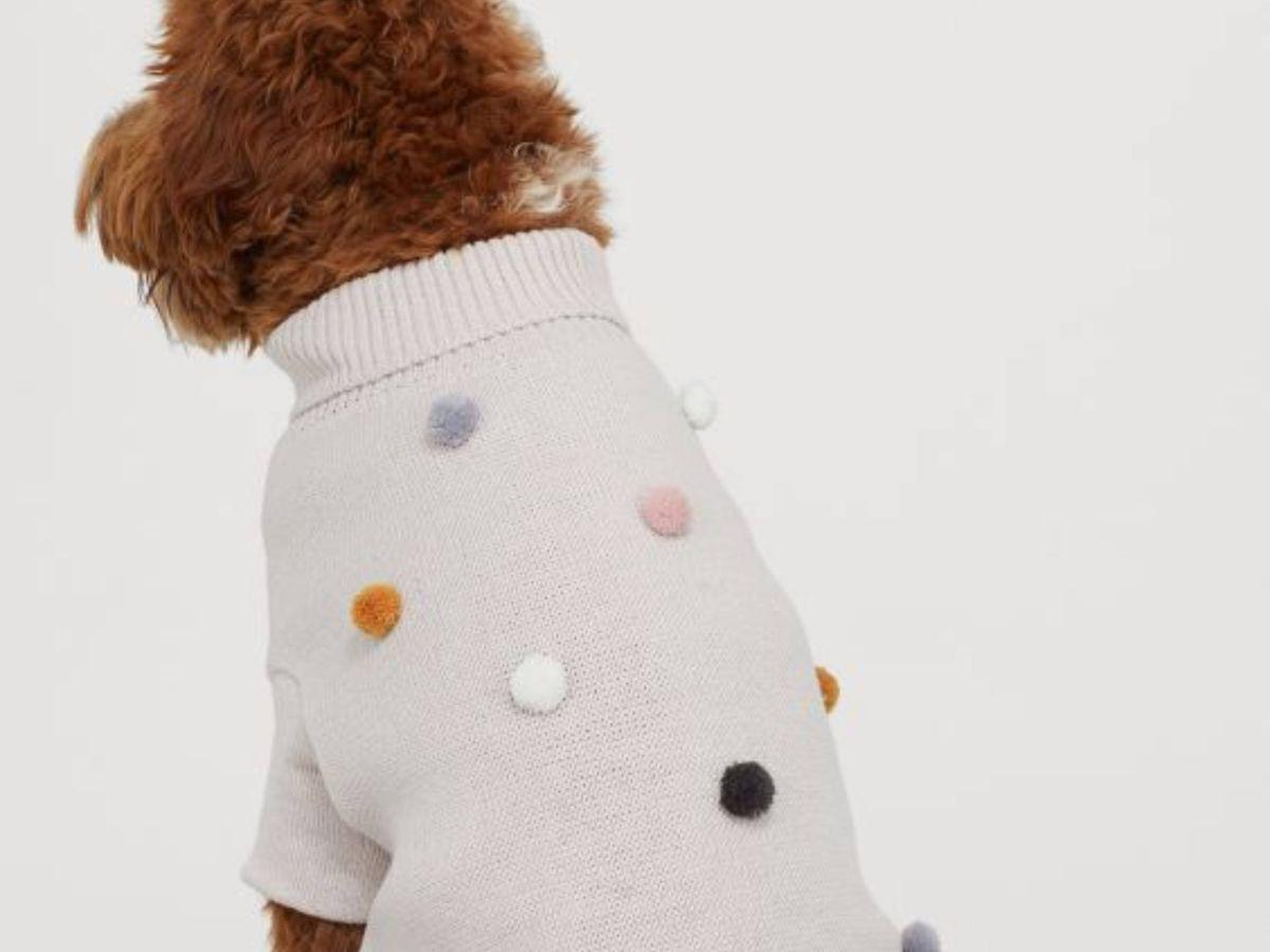 Foto: La nueva colección de prendas para perro de HyM. (Cortesía)