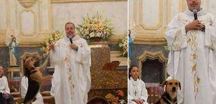 Post de Un sacerdote lleva perros a misa para que sean adoptados por los feligreses