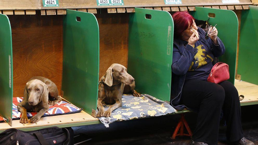 Un asesinato en un concurso canino espanta a Reino Unido