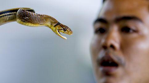 Un centro turístico de serpientes reabre en Bangkok a pesar de los bajos niveles turísticos