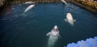 Post de Canadá prohibirá por ley la cautividad de delfines y ballenas en acuarios y parques