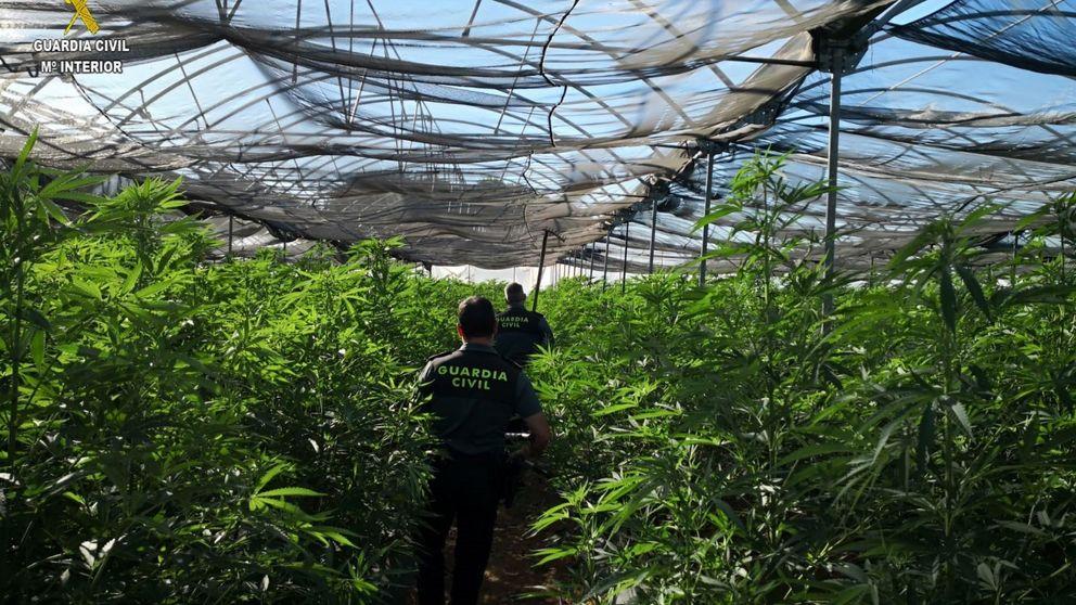 Detenido por custodiar 400 plantas de marihuana en Girona armado con un rifle