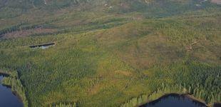 Post de Donald Trump permitirá la explotación de un bosque protegido de Alaska