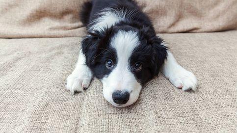 Cómo saber si tu perro tiene alergia y qué hacer al respecto