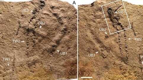 Estas son —posiblemente— las primeras huellas dejadas por un animal sobre la Tierra