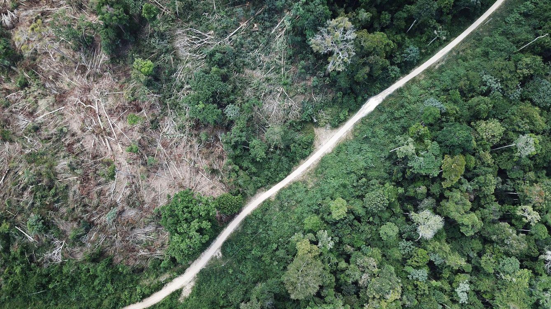 Foto: Foto aérea de una zona de la Amazonía limpiada por leñadores y granjeros, justo antes de arder. (Reuters)