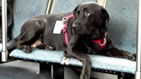 Una perra se coge el autobús todos los días para irse a jugar al parque (ella sola)