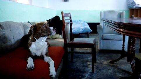 Botellones, drogas y hasta un cadáver: esto se encuentran los bancos en los pisos okupados