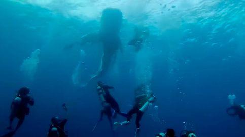 Un grupo de buceadores españoles rescata a tiburón atrapado en Maldivas