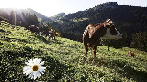No es solo la leche: la fiebre por lo ecológico se cuela en España (y viene de Bretaña)