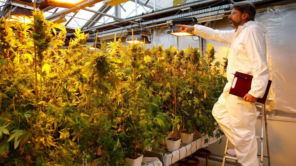 Foto: Laboratorio de plantas de cannabis (Reuters)