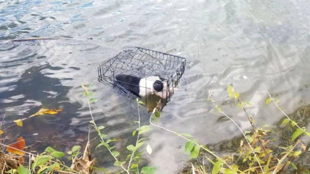 Rescata a un cachorro enjaulado de un lago helado y ahora quiere adoptarlo