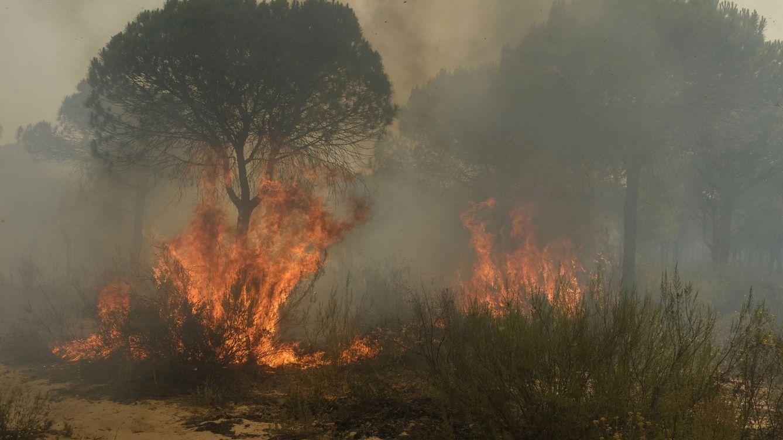 Amenaza a un tesoro medioambiental: esto es lo que el fuego está quemando en Doñana