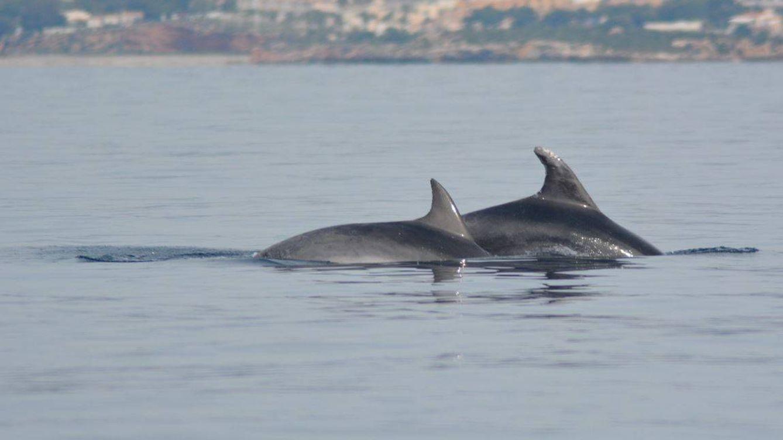 Pescadores y conservacionistas colaboran juntos para salvar a los delfines