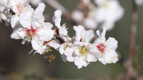 Un apicultor amenaza con destruir 15 millones de abejas por culpa del Brexit