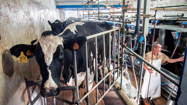 Bufetes y fondos se pelean por la demanda colectiva del llamado 'cártel de la leche'