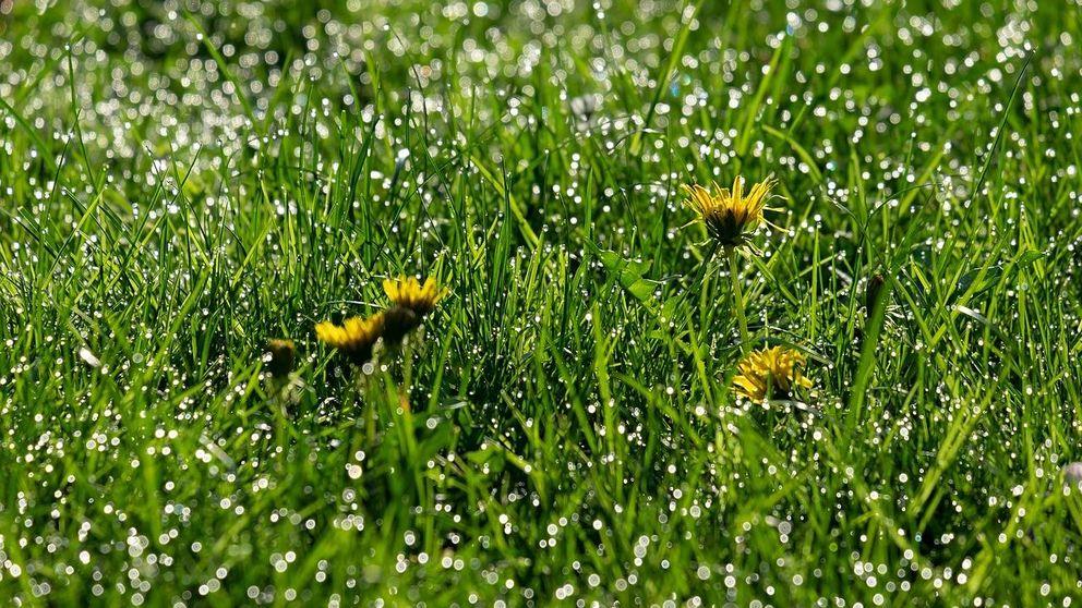 Olvídate de arreglar el jardín, las malas hierbas también son comestibles