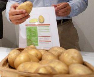 El precio de la patata sube un 12% interanual y se convierte en el alimento que más se encarece