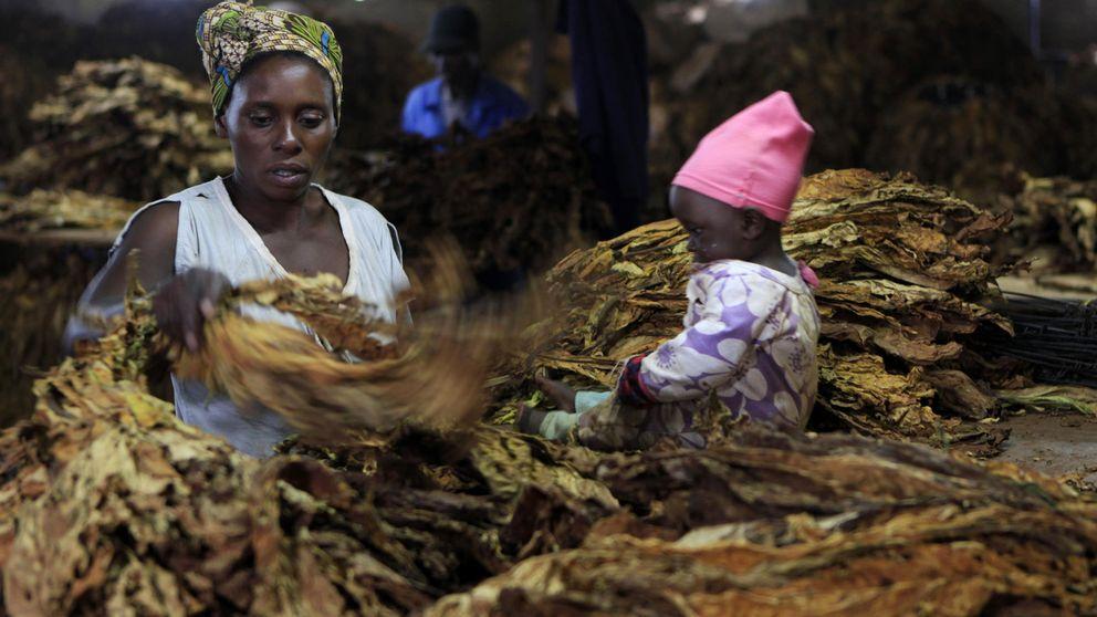 El tabaco que fumas lo cultivan niños esclavos