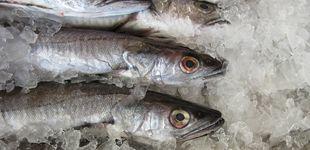 Post de Congelar el pescado no basta para evitar el anisakis: así debes hacerlo