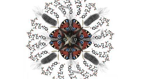 Descubren la explicación molecular de la celiaquía