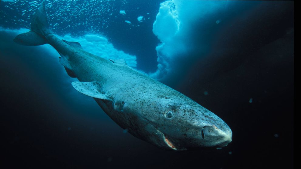 Esponjas, tiburones y humanos: los seres más longevos del planeta