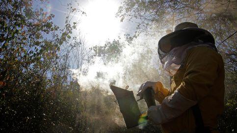Un apicultor, investigado por un ataque de abejas a cuatro mujeres en Navarra