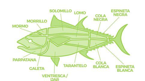 Guía del atún rojo: de la ventresca al morrillo, sus cortes más exquisitos