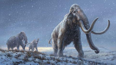 Dos hombres de Florida hallan un hueso de mamut de 1,2 metros mientras bucean