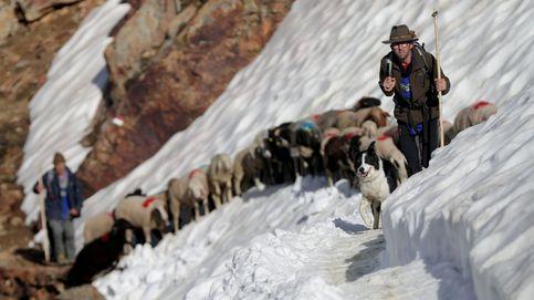 Los pastores que aún cruzan los Alpes