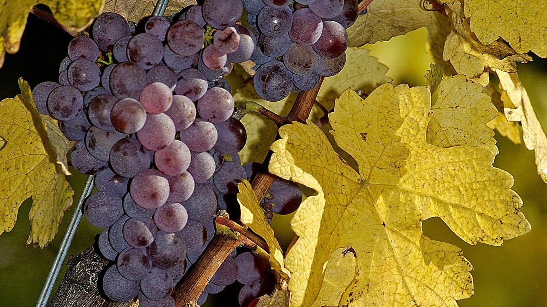 Foto: Maridajes vino a vino: Gewurztraminer