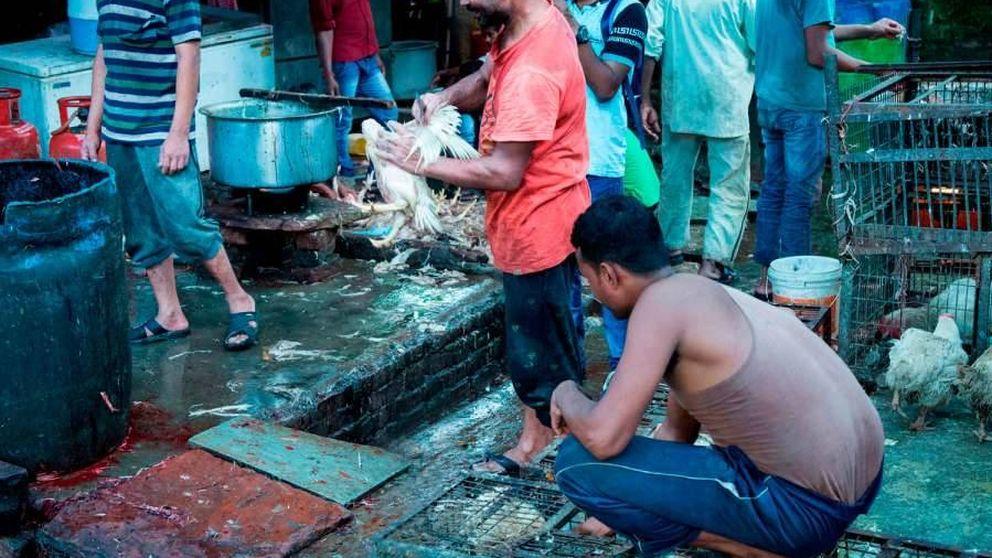 Caldo de cultivo de pandemias: ¿cuál es el futuro de los mercados de animales vivos?
