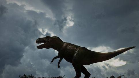 El T. Rex era muy lento: podrías adelantarlo incluso caminando, según un nuevo estudio
