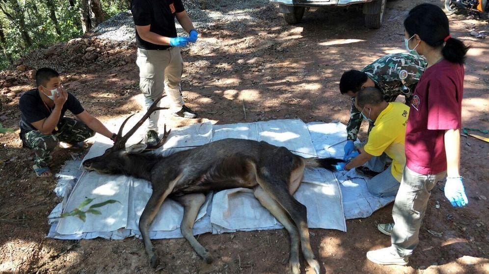 Foto: El estómago del ciervo tenía hasta 7 kilos de desperdicios humanos (EFE EPA/Office of Protected Area Region 13)
