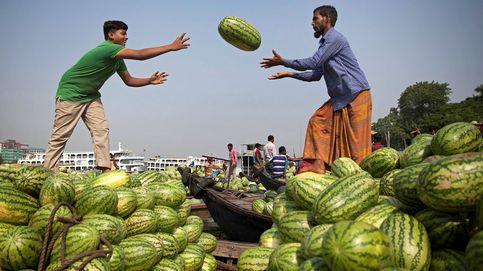 Cosecha de la sandía en Dacca