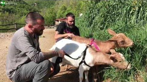 Dos cabras ciegas salen por primera vez