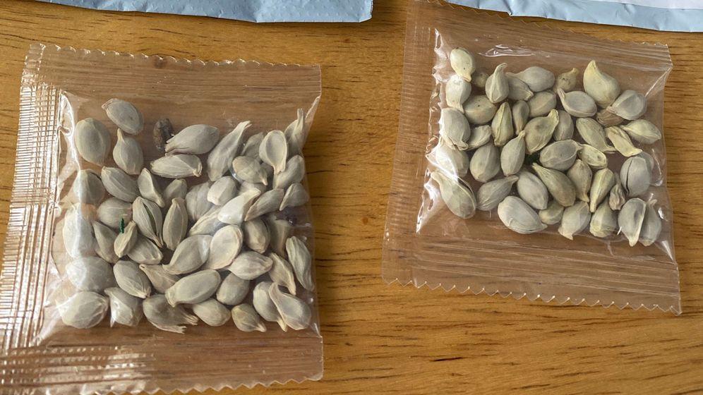 Foto: Las semillas, similares a los pistachos, han llegado por miles a Estados Unidos (Reuters)