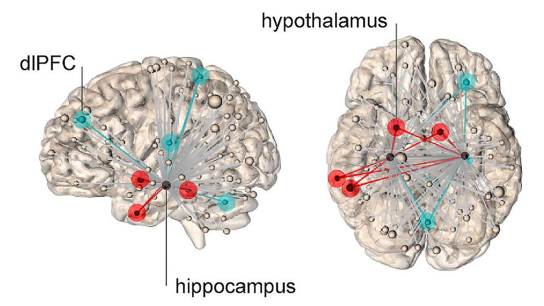 Las redes representadas por líneas rojas muestran conexiones con el hipotálamo, que predicen mayores niveles de estrés. Las líneas azules representan conexiones con la corteza frontal lateral dorsal, y niveles subjetivos más bajos de estrés.. Foto: